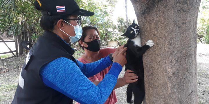 การฉีดวัคซีนป้องกันโรคพิษสุนัขบ้า ประจำปี 2564